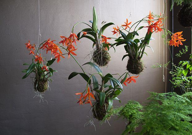 String art hangin plant