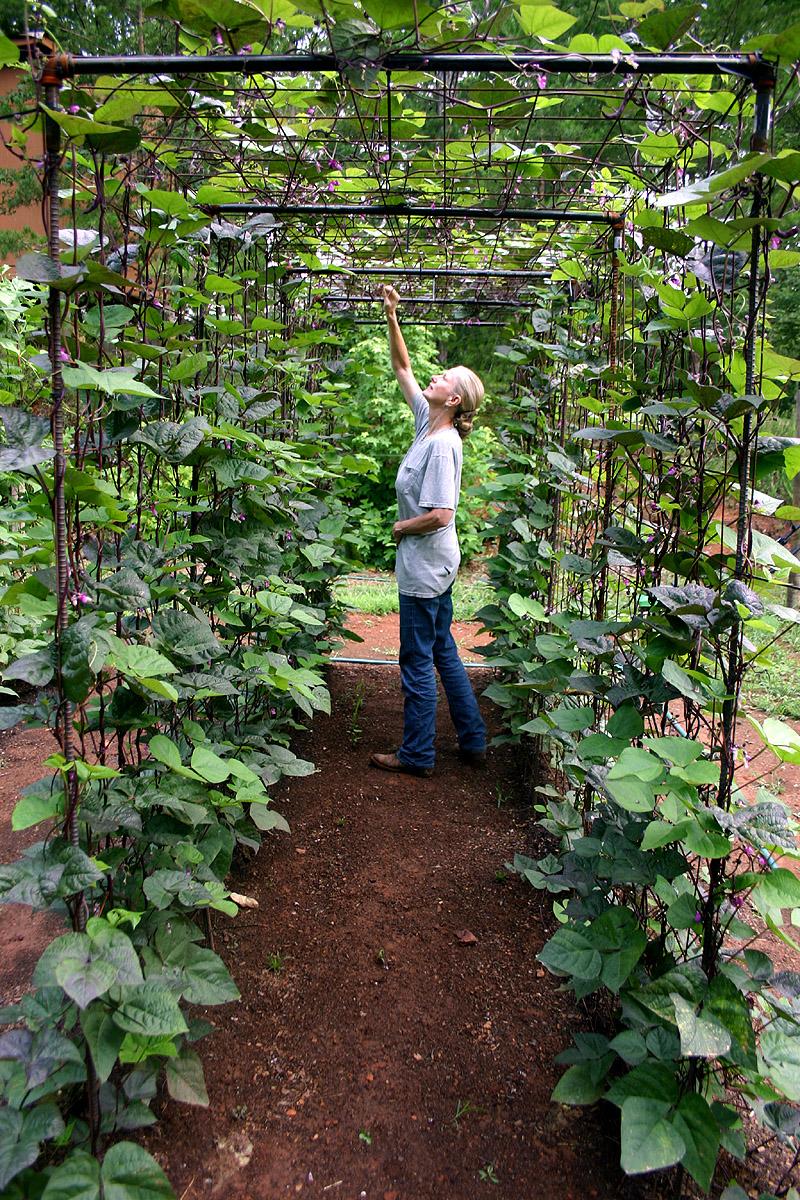 Tunnel garden trellis