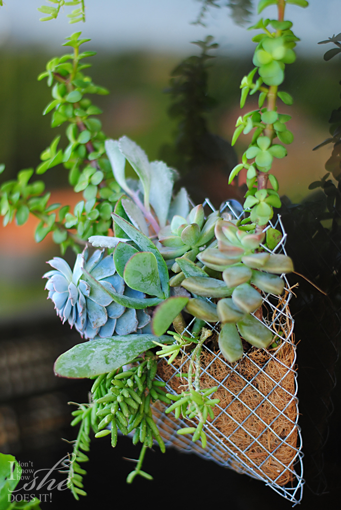 Wire pocket planter
