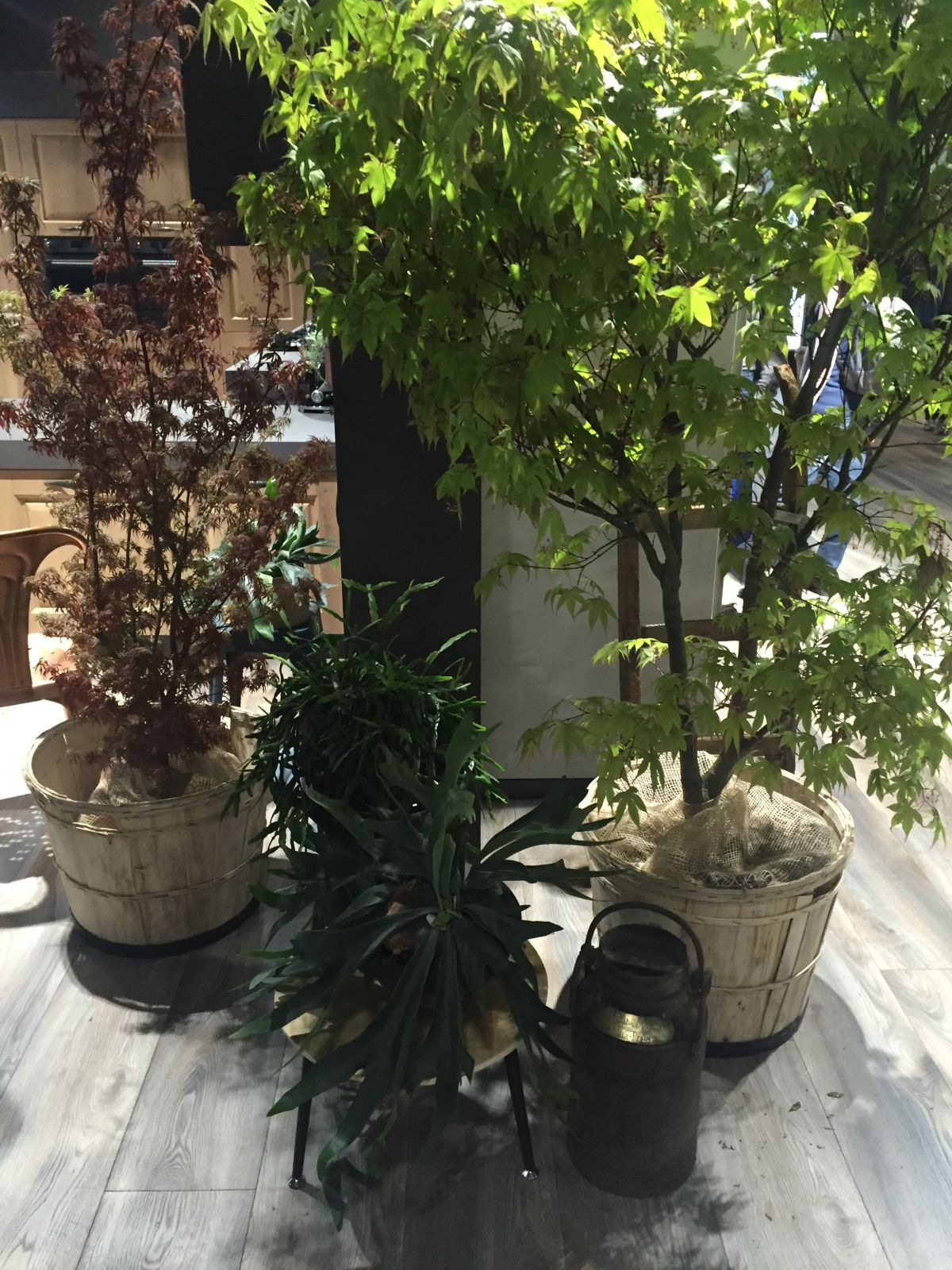 diff floor plants that purify air