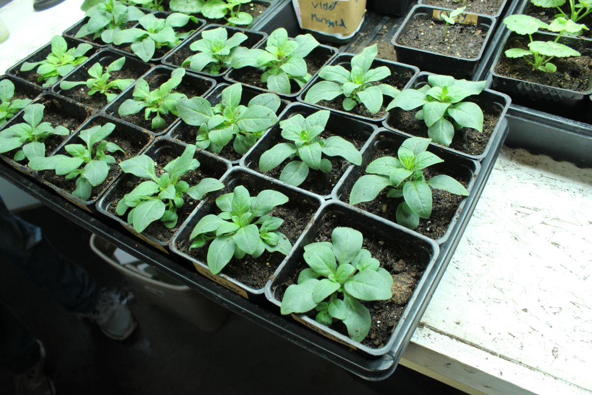 seed germination containers