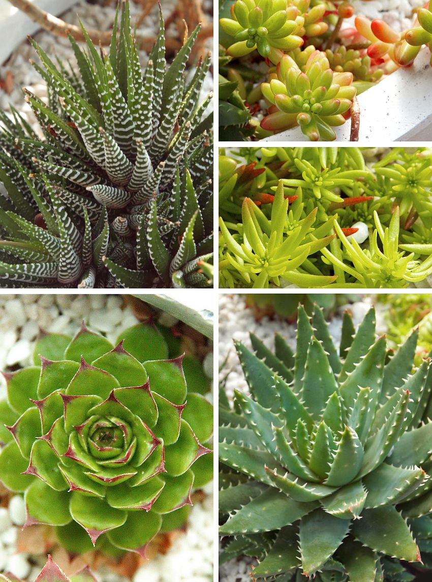 All About Succulents Forms