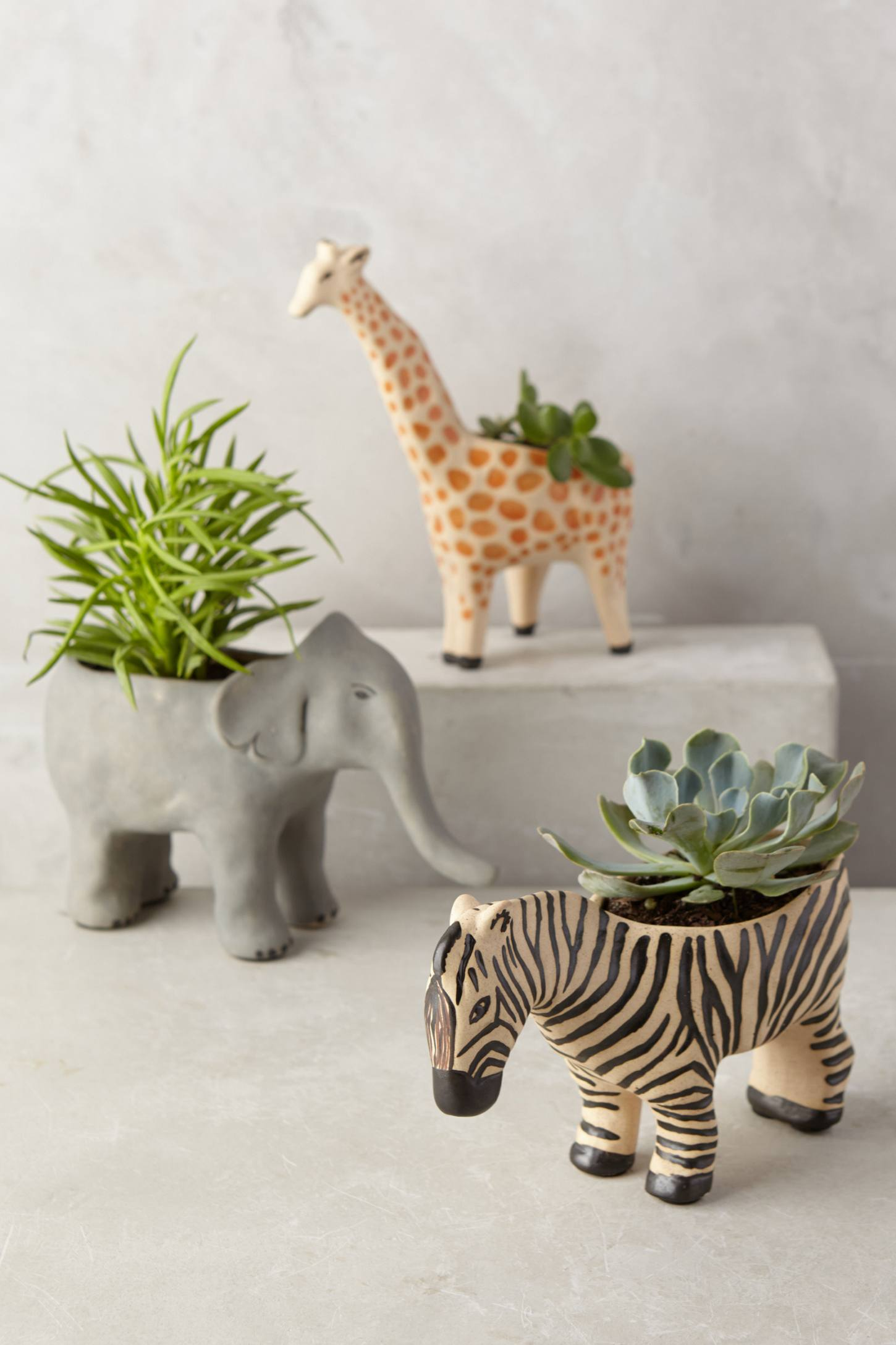 Animal succulent planter