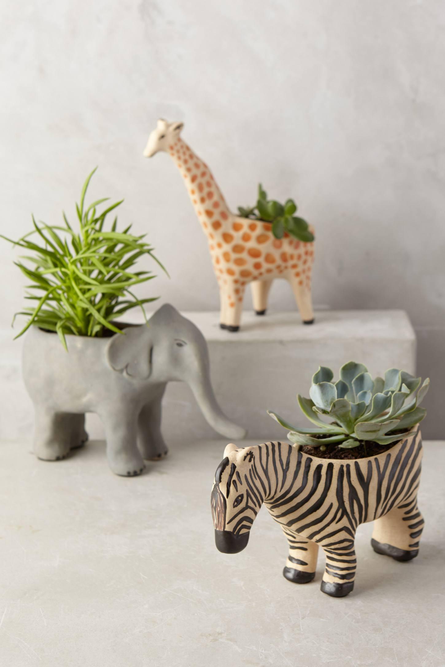 Animal succulent planter