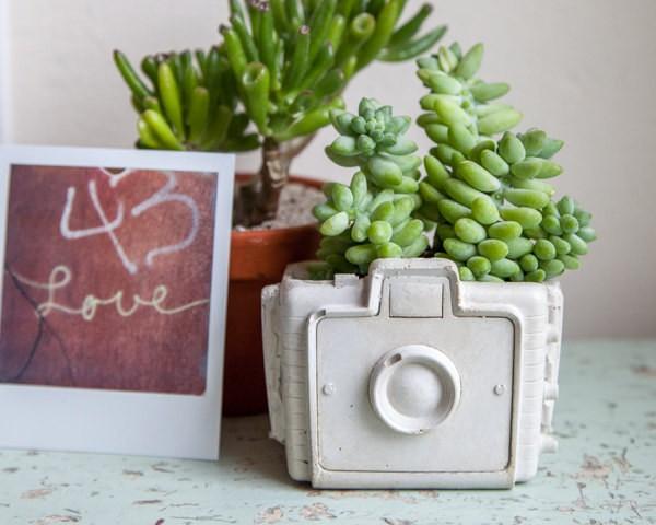 Camera succulent planter