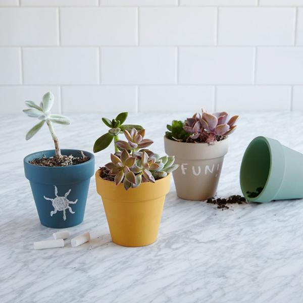 Chalkboard succulent planter
