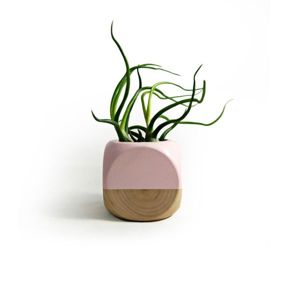 Colorblock succulent planter
