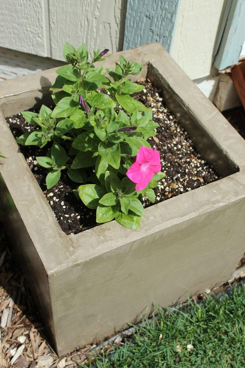 DIY Concrete Planters top