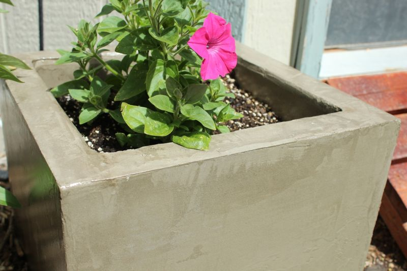 DIY Concrete Planters with Colorful Flowers