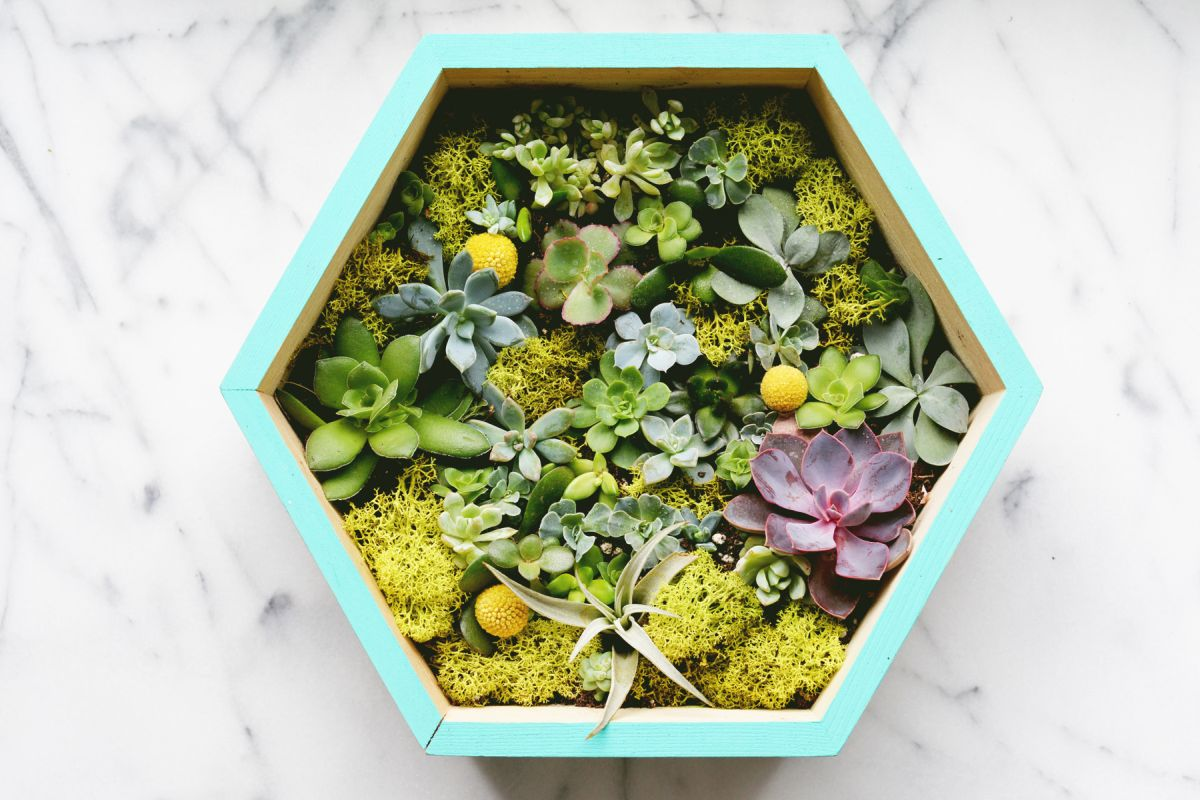 DIY Succulent Wall Planter Closer
