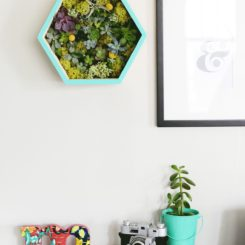 DIY Succulent Wall Planter Homedit  interior design and architecture inspiration
