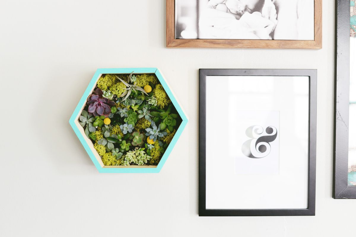 DIY Succulent Wall Planter Project