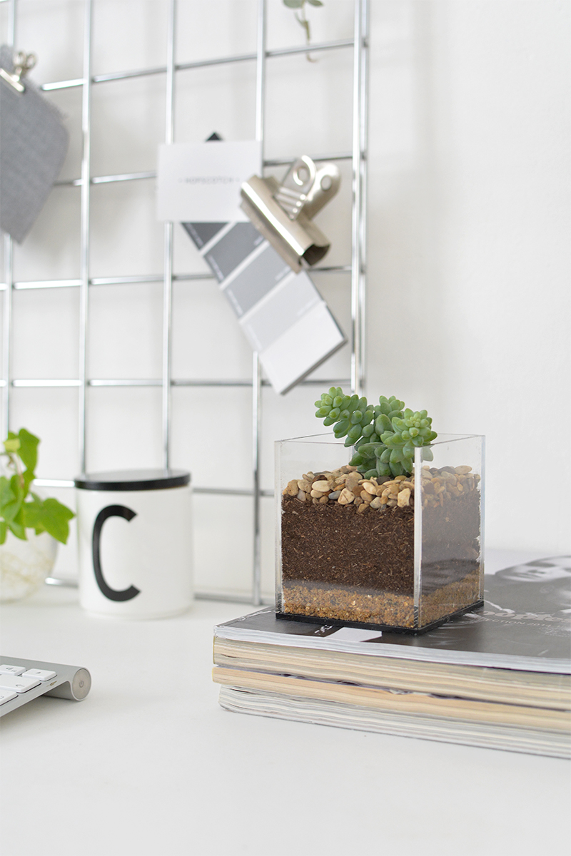 DIY terrarium on books