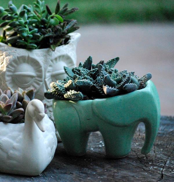 Elephant succulent planter