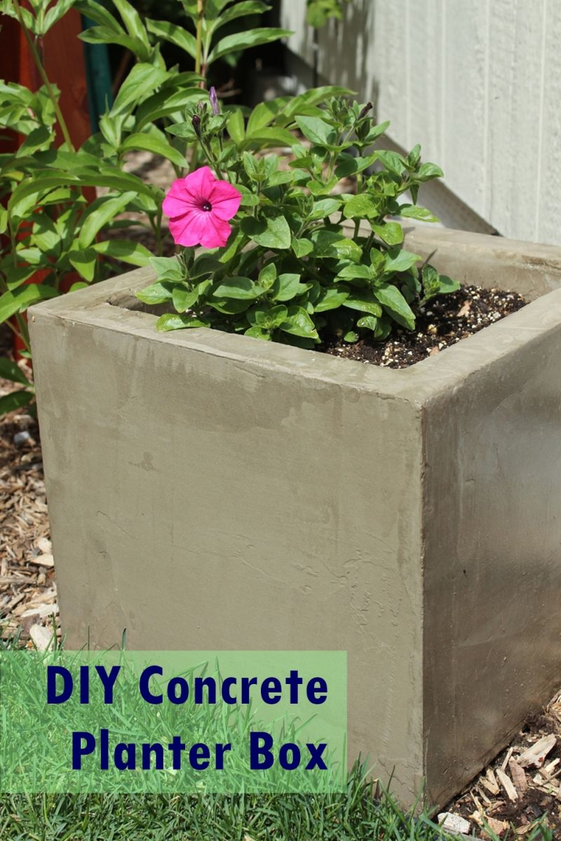 Flowers In Concrete Planters