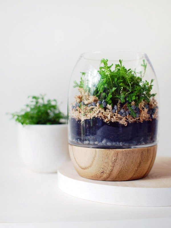 Gorgeous terrarium diy