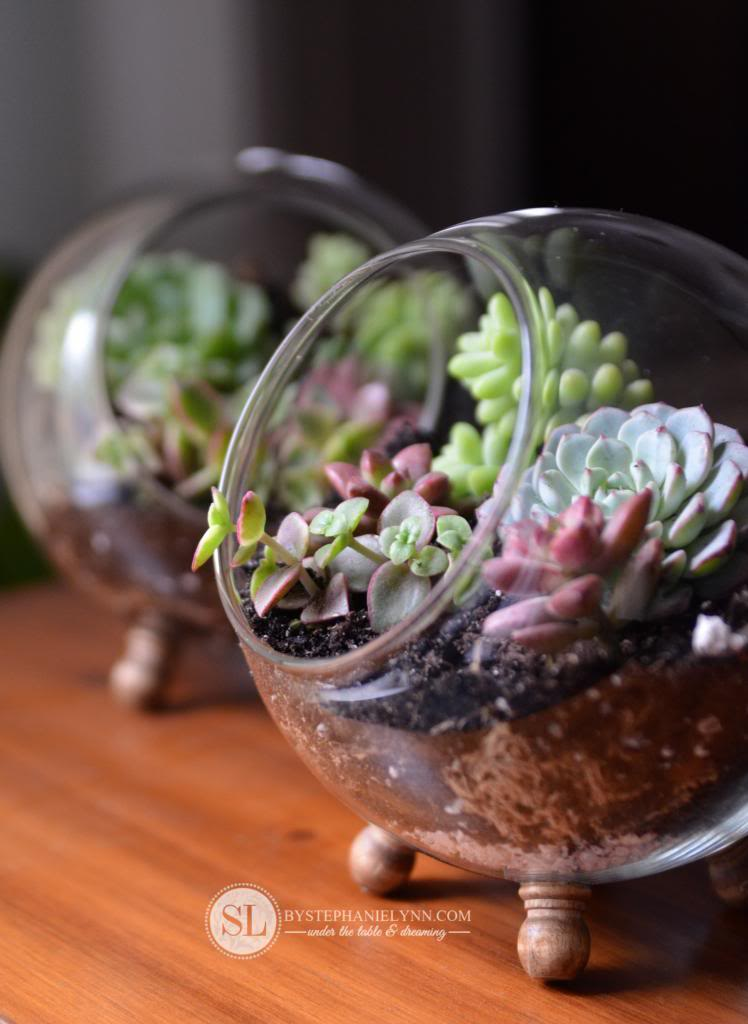 Make terrarium on desk