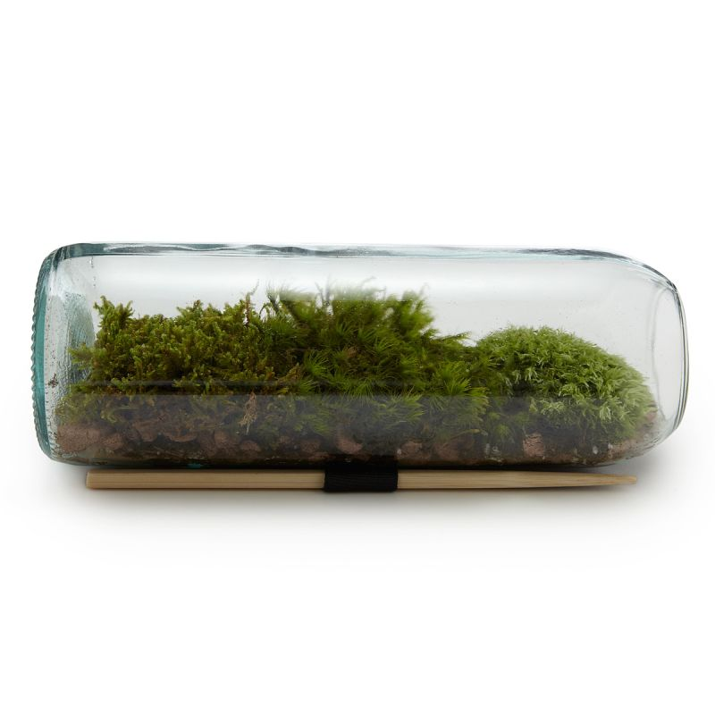 Moss bottle terrarium