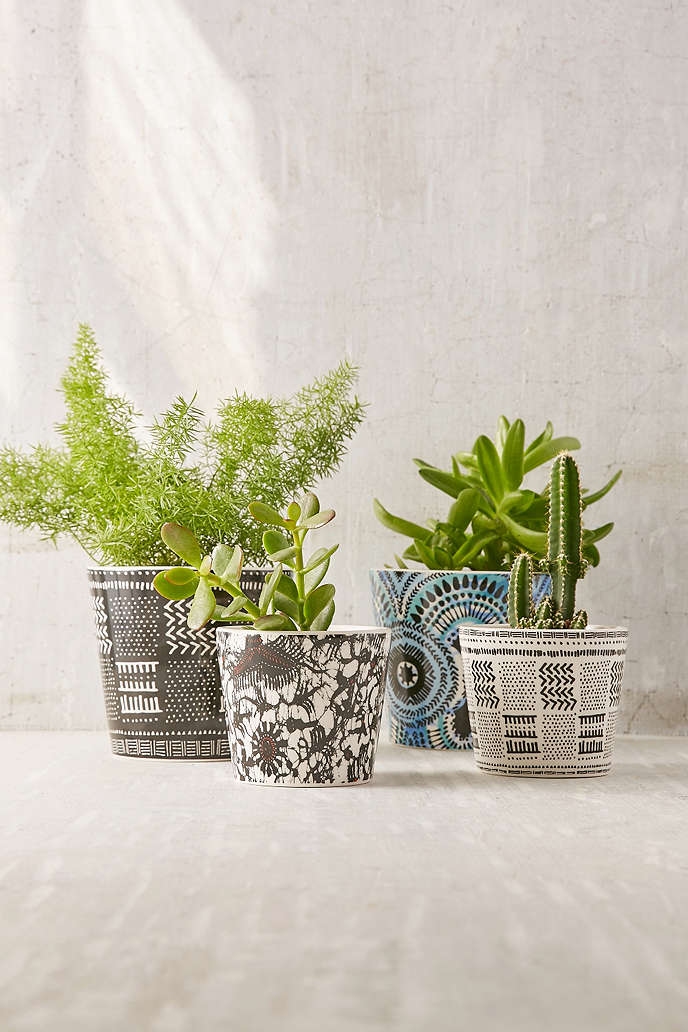 Patterned succulent planter