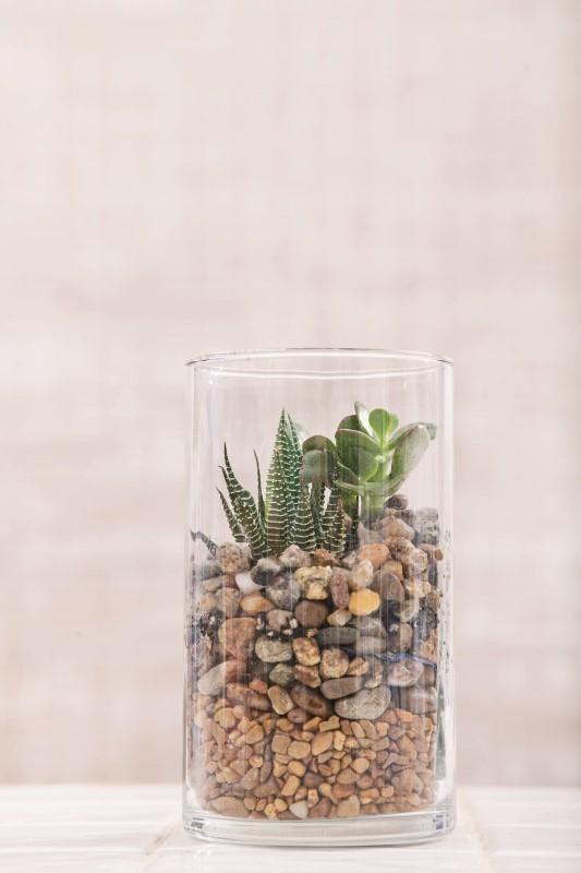 Pebble terrarium