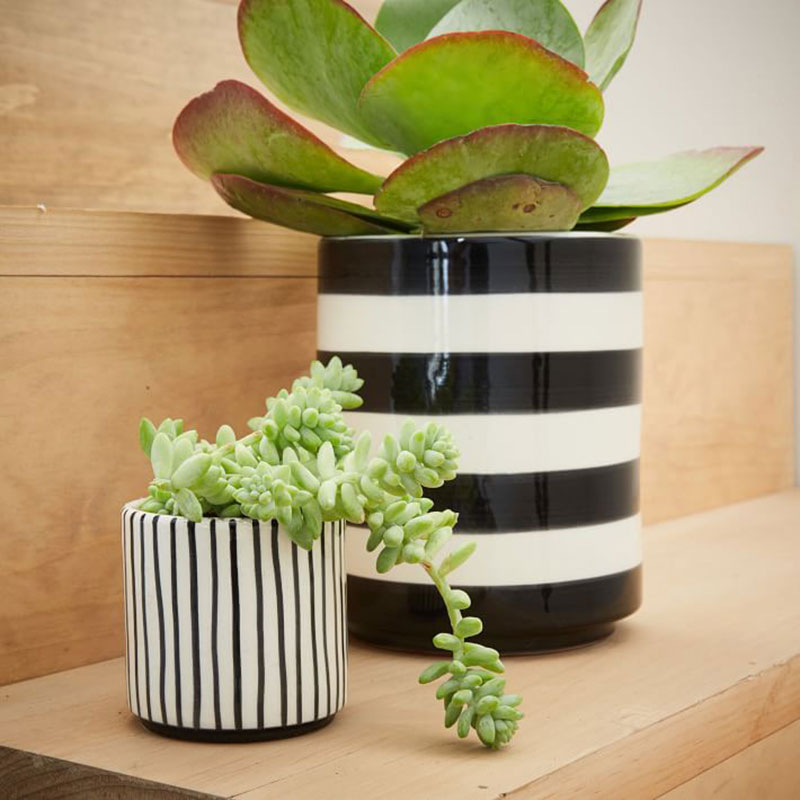 Striped succulent planter