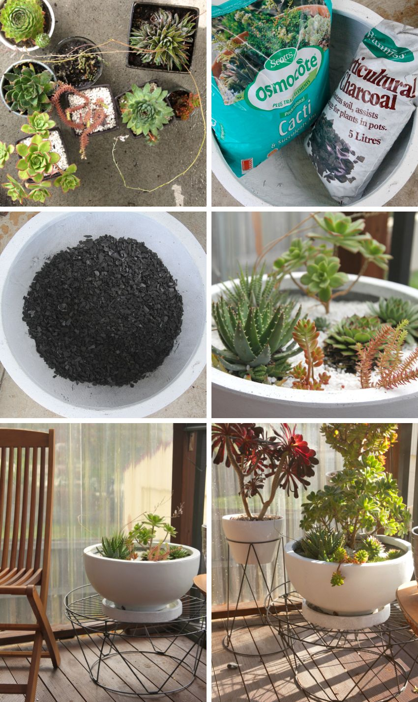 Houseplants 101 all about succulents succulent planting diy workwithnaturefo