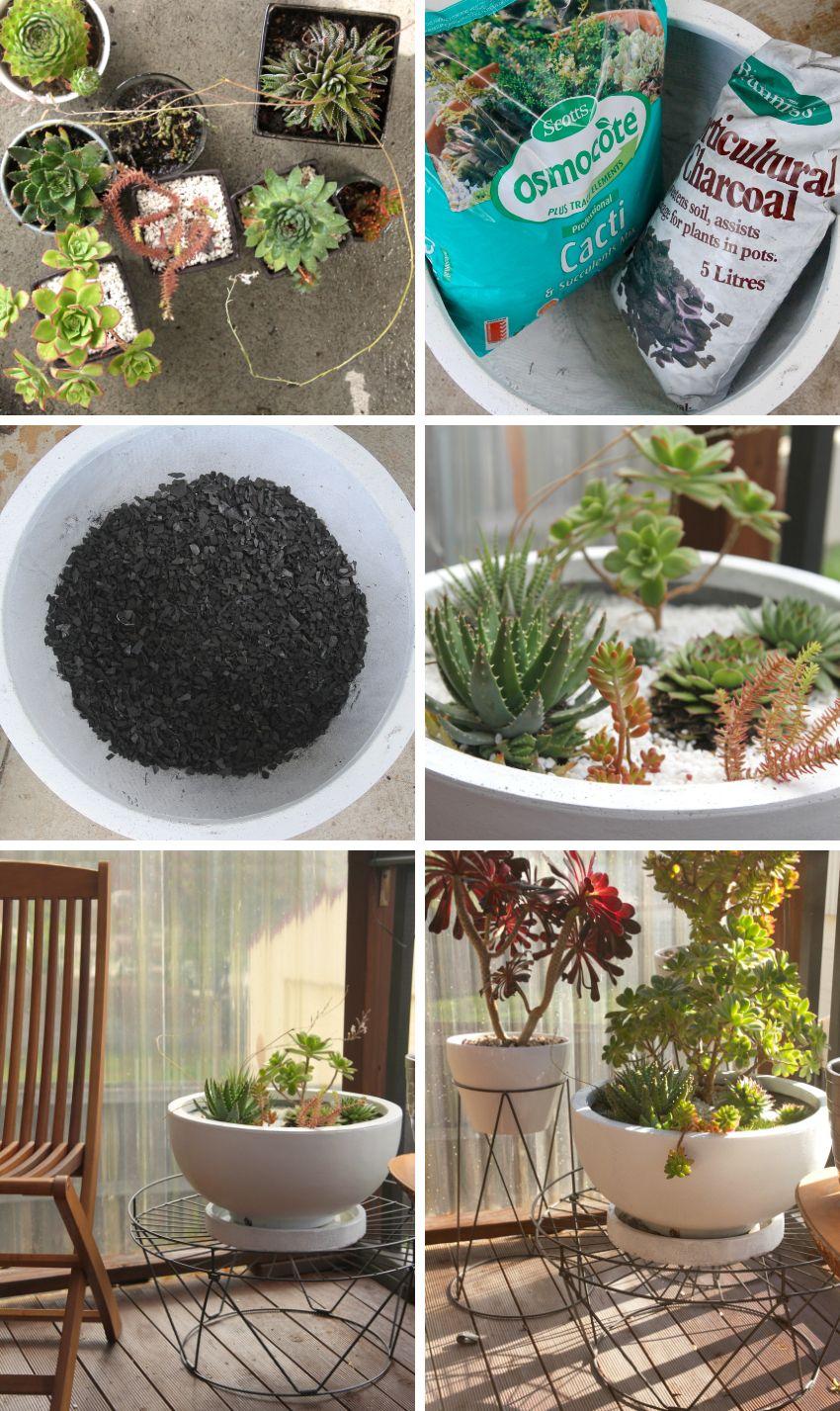 Succulent planting DIY
