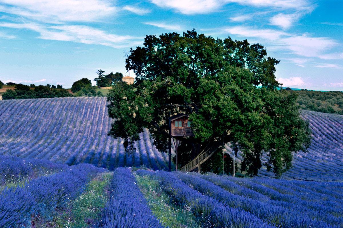 Suite Blue treehouse flowering fields
