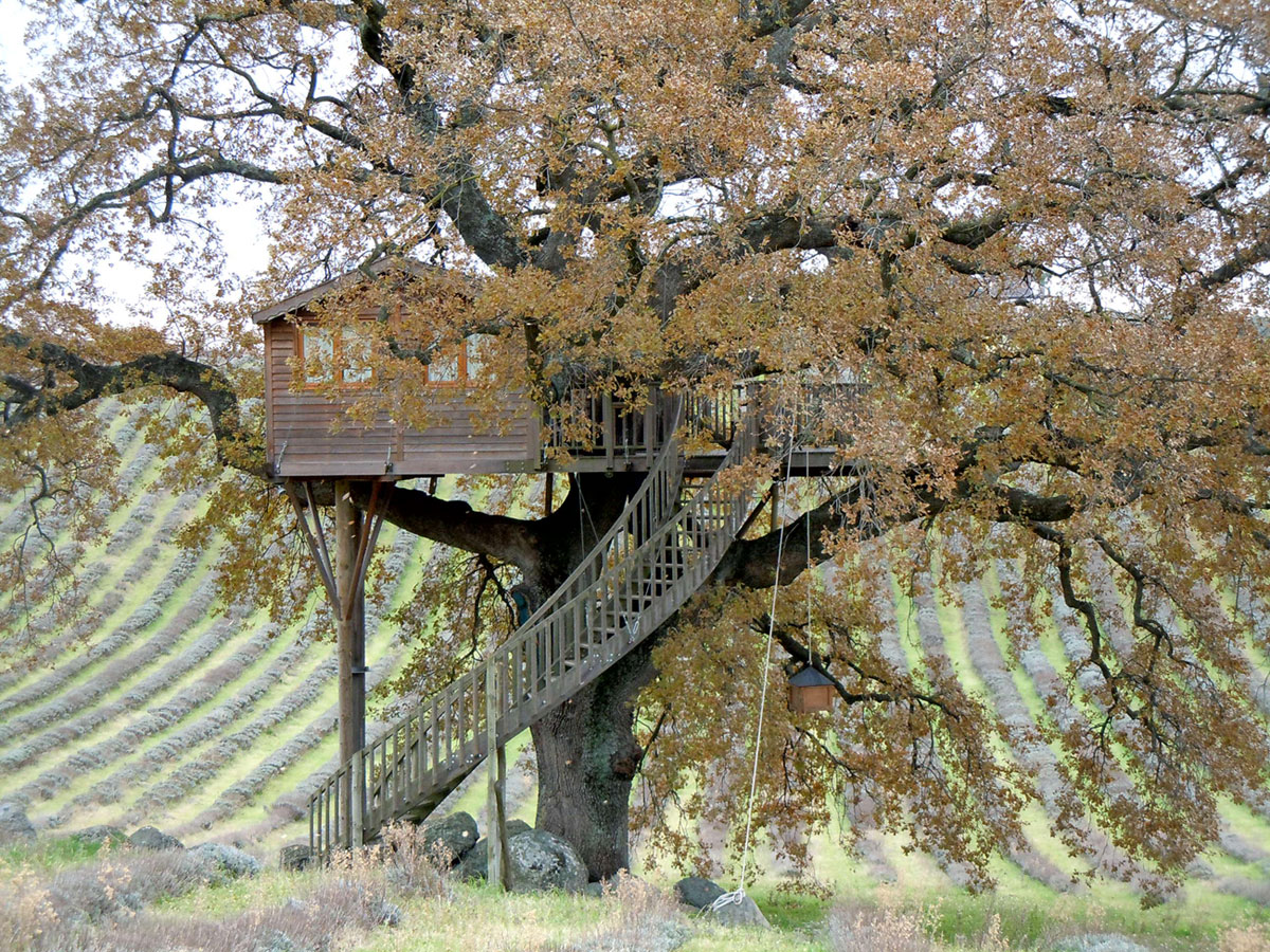 Suite Blue treehouse in autumn