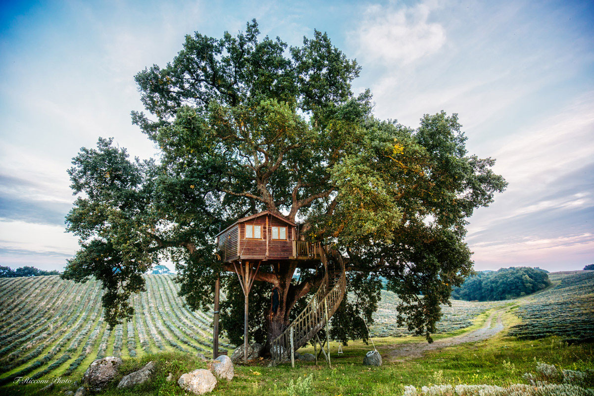 Suite Blue Treehouse In Tree Context