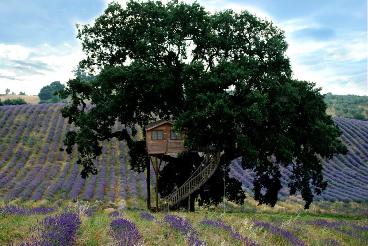 Suite Blue treehouse majestic tree