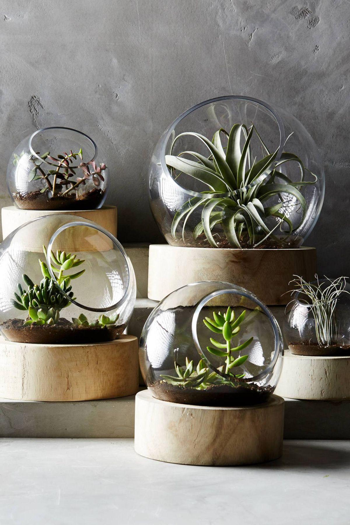 Terrarium succulent planter