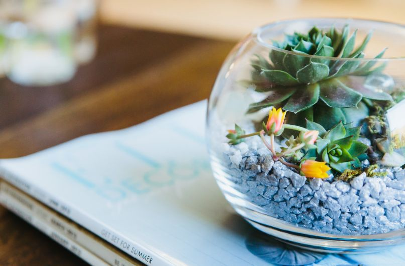 versatile beauty of terrariums