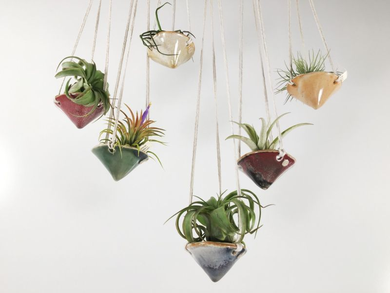 Air plant hanging planter
