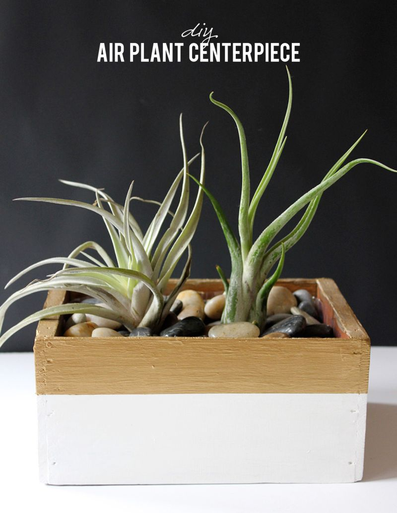 Air plant table centerpiece