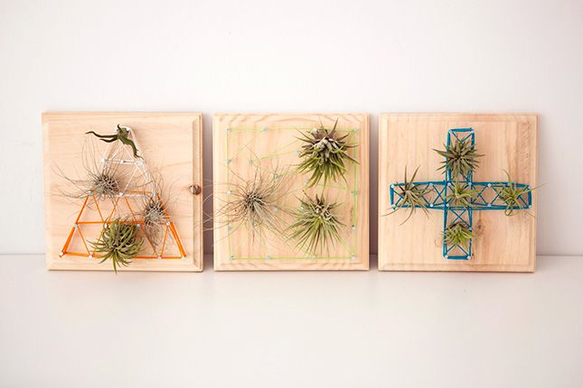 Air plants string art