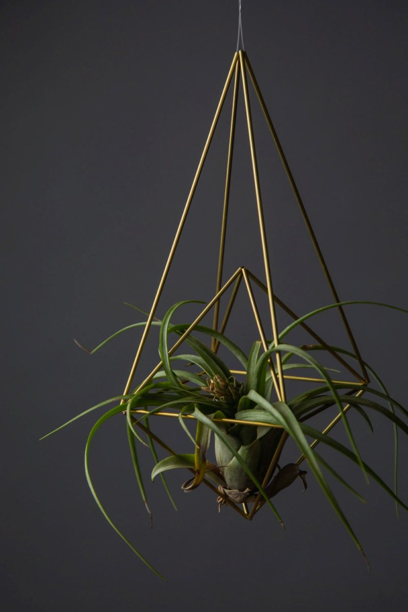 Brass diamond raindrop air plant