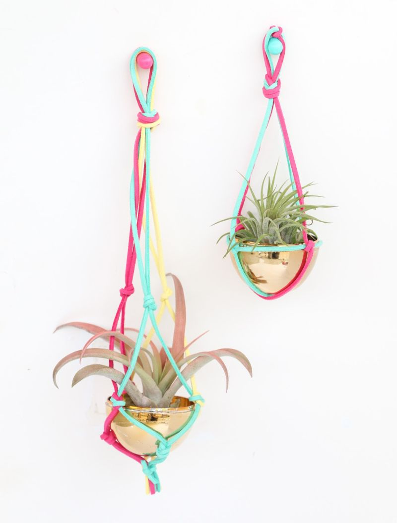 Colorful leather straps hanging air plants