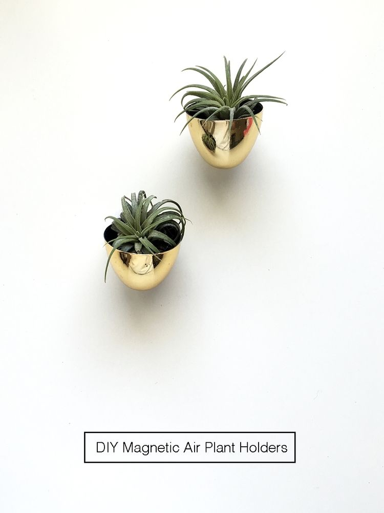 DIY magnetic air plant holders