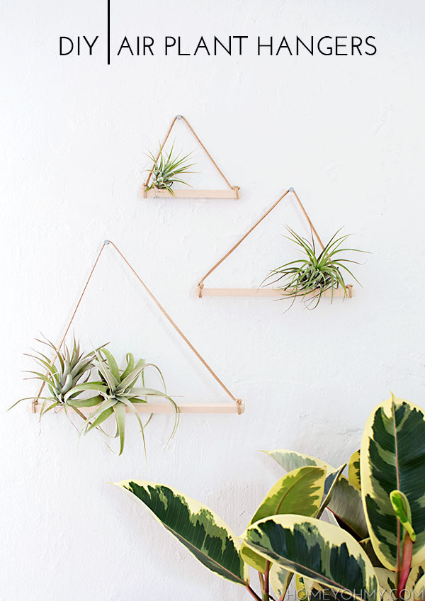 DIY wall hanging air plants