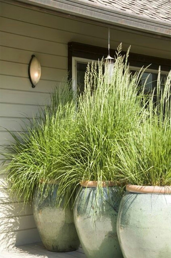 Lemongrass landscaping