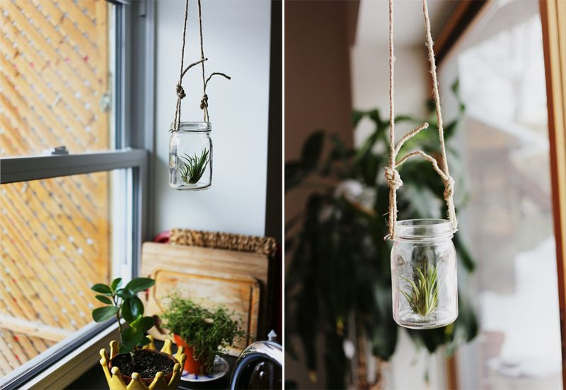 Mason jar air plants hanging