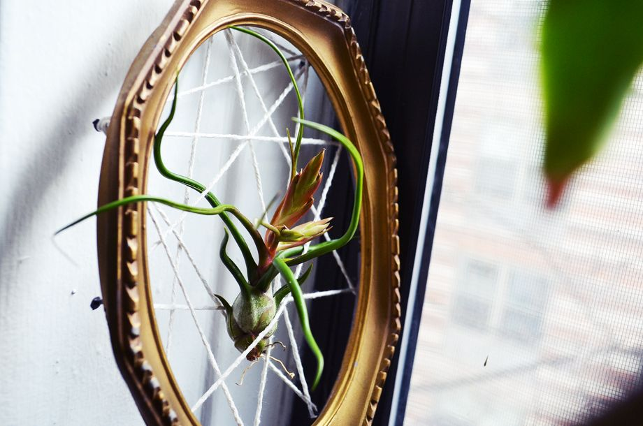 Old frame used for air plants