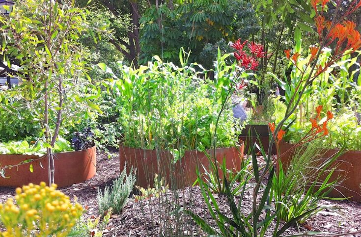 Raised garden beds can be designed using metal containers for long-lasting beauty