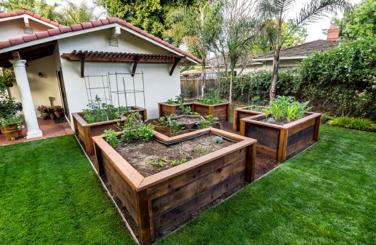 You can also use large wooden planters to grow vegetables. Just make sure they're food-safe