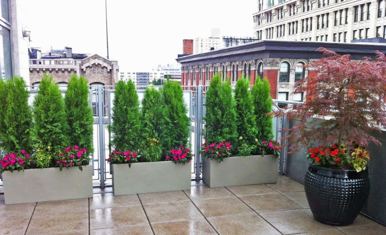 Shrubs and bushes can be used to add privacy to a deck or to delimit a garden
