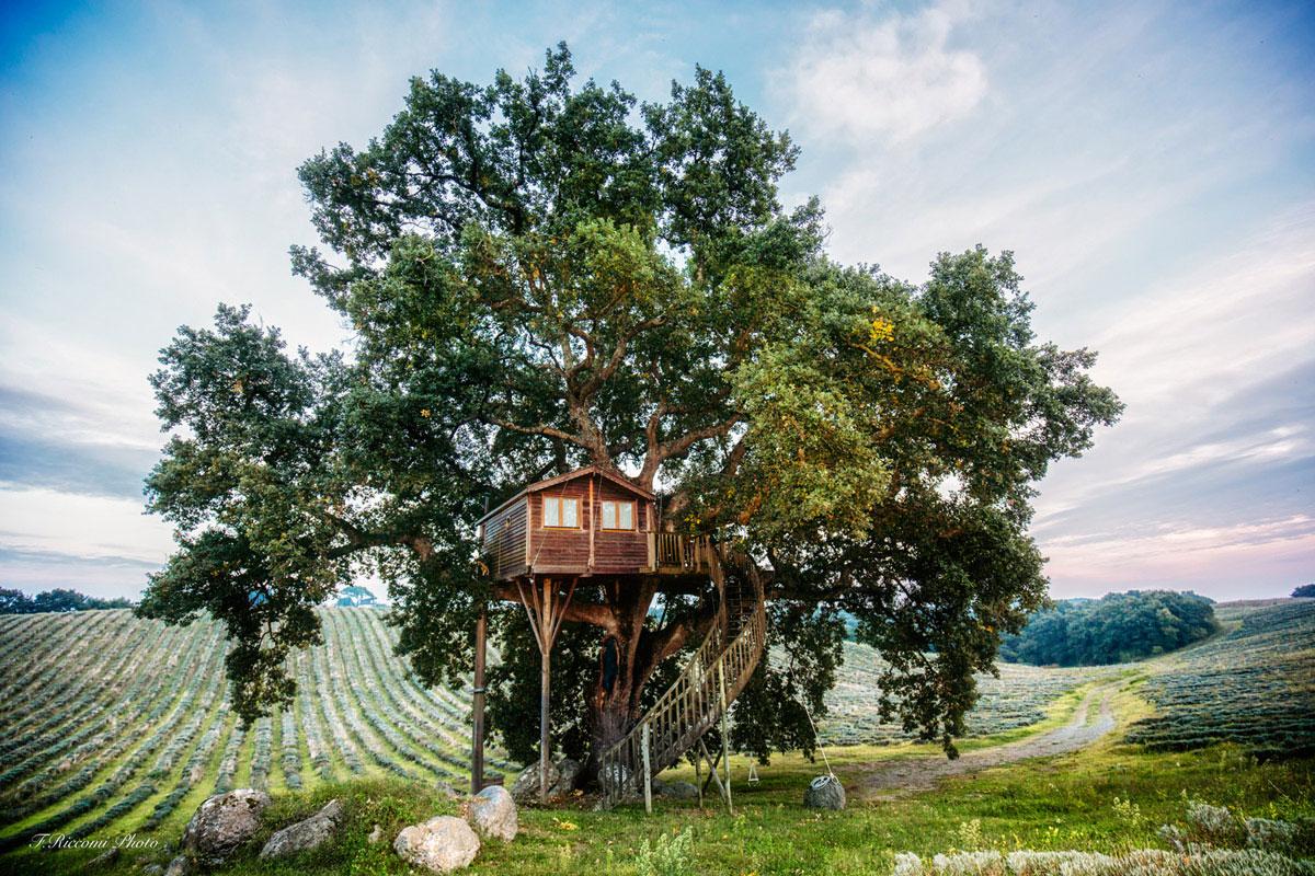 Stunning tree house