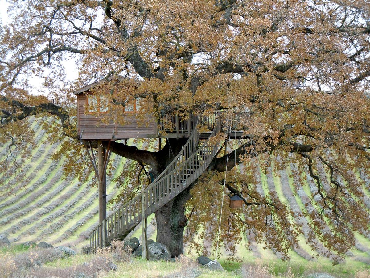 Treehouse design plans