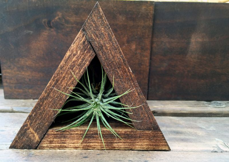 Triangle wood air plant