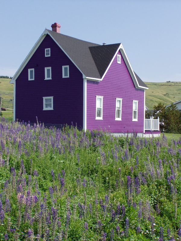 Violet purple house
